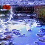 Splash by Kaya